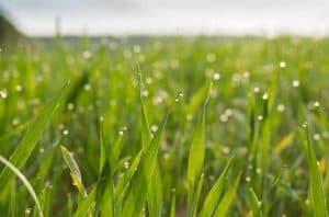meadow 2224775 640 300x198 1