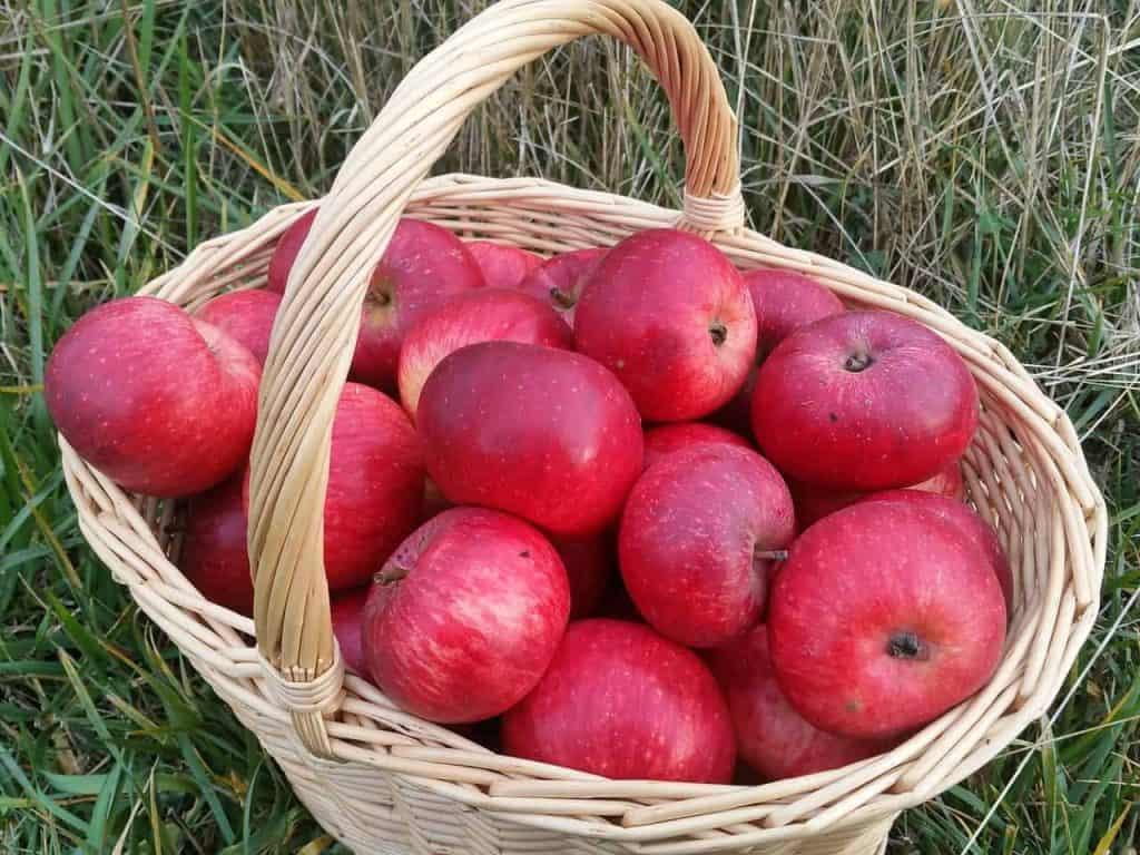 apples 1902128 1280
