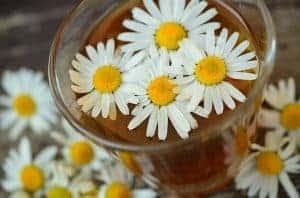 ガラスの中のカモミールの花