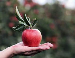 手のひらの上に横たわるリンゴ