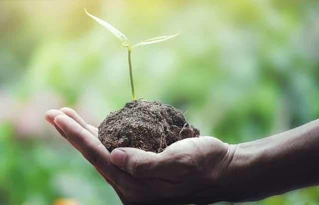 手のひらの植物