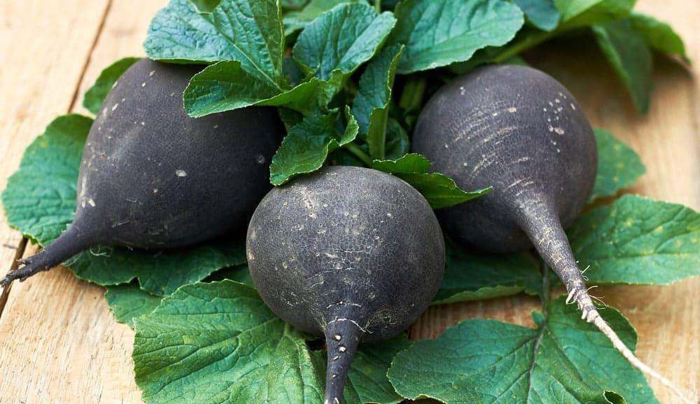 黒かぶの葉付き菜っ葉3枚